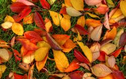 Autumn leaves ground 1
