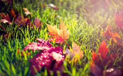 Autumn leaves in morning dew
