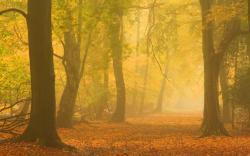 Autumn mist forest road
