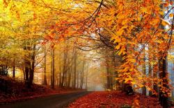 Trees are tall and prosperous in autumn, and the leaves are turning yellow, still it makes an uncomparable scene.