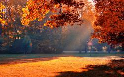 Autumn park sunshine