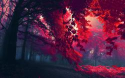 Autumn red foliage