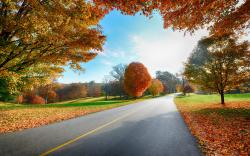 Autumn road nature scenery