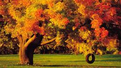 Autumn Tree HD Wallpapers-8