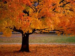 Autumn Leaves Trees Pictures 5 HD Wallpapers