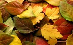 Autumn Wallpaper 13848