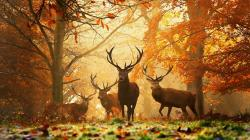 Autumn Wallpapers: Free Download Autumn Wallpaper 1366x768px