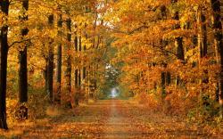 HD Wallpaper   Background ID:16086. 1680x1050 Earth Autumn