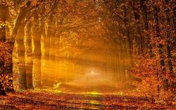 Autumn Autumn Wallpaper