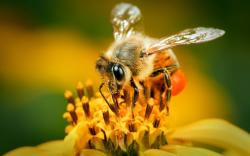 Views: 1318 Cool Bee Wallpaper 20849