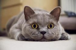 Permalink to 25 Amazing Cat Facts