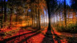 Download · Awesome Fall ...