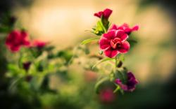 Download · Awesome Flower Wallpaper