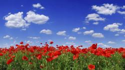 Flower Field Wallpaper 13400
