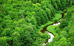 Image: http://www.desktopwallpaperhd.net/wallpapers/7/4/forest-green-scenery-wallpapers-landscape-stream-river-awesome-images-computer-74132.jpg