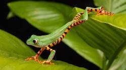 Views: 1001 Frog Wallpaper 11914