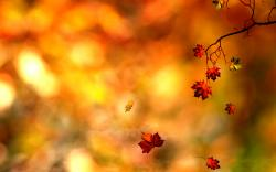 Awesome Autumn Leaf Wallpaper PC 064 Wallpaper