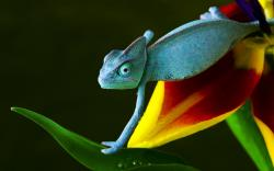 Awesome Lizard Wallpaper