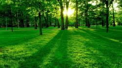 Green Paradise Forest Sun Trees Awesome Nature Hd Wallpaper 1920x1080px