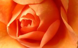 Awesome Orange Flowers Wallpaper 10453