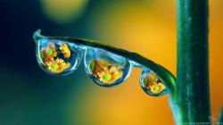 You can find Amazing Three Drop On Plant Natural wallpapers in many resolution such as 1024×768, 1280×1024, 1366×768, ...