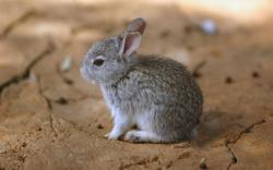 awesome rabbit hd wallpapers widescreen desktop images rabbit