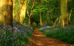 Awesome Spring Forest Wallpaper Download is high definition wallpaper. You can make Awesome Spring Forest Wallpaper Download For your Desktop Background, ...