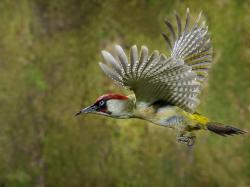 Awesome Woodpecker Pictures