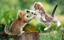 Baby Animal Desktop Backgrounds Pictures of baby animals