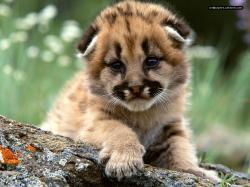 Baby Animal Baby