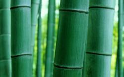 Bambo Nature Macro HD Wallpaper