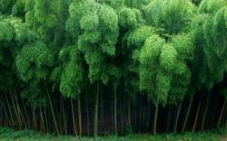 HD Wallpaper | Background ID:326595. 2560x1600 Earth Bamboo