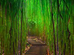 Bamboo wallpaper oriental wallpaper asian wallpaper hawaii Room Idea