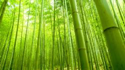 bamboo wallpaper. a4ae60e1dfabe6d1006838b5f9bcd410