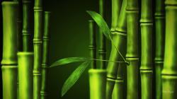 Bamboo Wallpaper