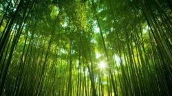 Bamboo Wallpaper · Bamboo Wallpaper ...