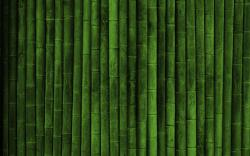 Green Bamboo Background (click to view)