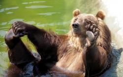 ... Bathing bear 1680x1050 wallpaper ...