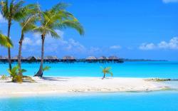 Beach palms sandbank
