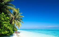 Beach Palms Sun Wallpapers Pictures Photos Images. «