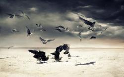 Beach Sand Birds Gulls