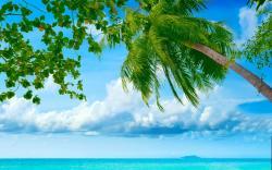 Beach sea palms hd