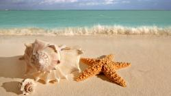 Seashells and a starfish in close up on a beach in front of