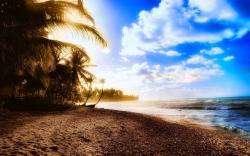 Beach summer palms