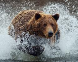 Bear Running Wallpaper in 1280x1024 5:4