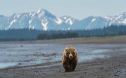 Bear Wilds