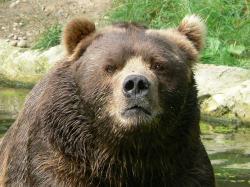 Wikipedia:Don't poke the bear