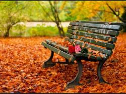 Beautiful autumn bench HQ WALLPAPER - (#161109)