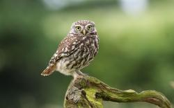 Beautiful Bird Owl