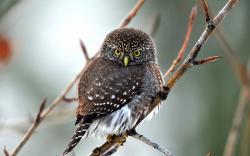 Beautiful Bird Owl Nature